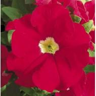 Петуния карликовая грандифлора Ультра F1 скарлет /1.000 семян/ *Syngenta Seeds*