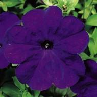 Петуния Ура F1 синяя /1.000 семян/ *Syngenta Seeds*