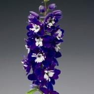 Дельфиниум Екскалибур темно-синий с белым глазком /100 семян/ *Syngenta*