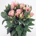 Эустома Флорида F1 розовая /100 семян/ *Pan American*