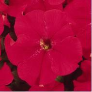 Петуния Дримс красная /1.000 семян/ *Pan American*