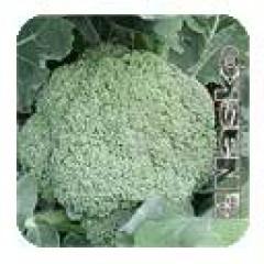 Капуста брокколи Трубадур /2.500 семян/ *Наско*