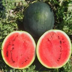 Арбуз Шуга Бейби /0,5 кг семян/ *United Genetics*