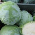 Капуста белокочанная Муксума F1 /2.500 семян калибр/ *Rijk Zwaan*