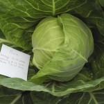 Капуста белокочанная Пикси F1 /1.000 семян/ *Dorsing Seeds*