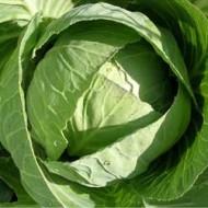 Капуста белокочанная Селтик F1 /1.000 семян/ *Dorsing Seeds*
