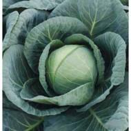 Капуста белокочанная Томас F1 /2.500 семян/ *Bejo Zaden*