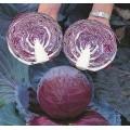 Капуста краснокочанная Примьеро F1 /2.500 семян/ *Bejo Zaden*