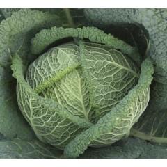 Капуста савойская Вироса F1 /2.500 семян/ *Bejo Zaden*