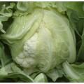 Капуста цветная Сантамария F1 /1.000 семян/ *Rijk Zwaan*