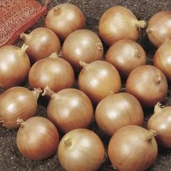 Лук Дэнсити /1 кг семян/ *Anseme*