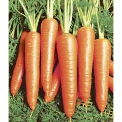 Морковь Вита Лонга /50 грамм/ *Bejo Zaden*