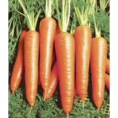 Морковь Вита Лонга /500 грамм/ *Bejo Zaden*
