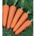Морковь Канада F1 (1,6-1,8 мм) /100.000 семян/ *Bejo Zaden*