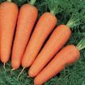 Морковь Канада F1 /25.000 семян (1,6-1,8 мм)/ *Bejo Zaden*