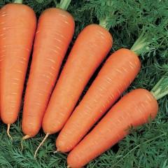 Морковь Канада F1 (2,2-2,4 мм) /100.000 семян/ *Bejo Zaden*
