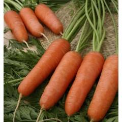 Морковь Карини /50 грамм/ *Bejo Zaden*