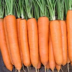 Морковь Колтан F1 /100.000 семян/ *Nunhems Zaden*