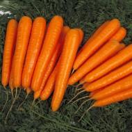 Морковь Лагуна F1 /100.000 семян (pr)/ *Nunhems Zaden*