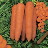 Морковь Скарла /0,5 кг семян/ *Tezier*