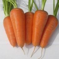 Морковь Шантане РэдКор /0,5 кг семян/ *United Genetics*