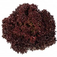 Салат Кармези /1.000 семян драже/ *Rijk Zwaan*