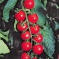 Томат Гармония F1 /1.000 семян/ *Tezier*
