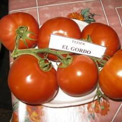 Томат Эл Гордо F1 /500 семян/ *United Genetics*