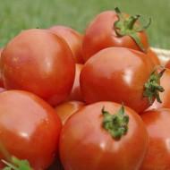 Томат UG B169 F1 /1.000 семян/ *United Genetics*