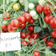 Томат Кимберлино F1 /1.000 семян/ *United Genetics*