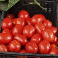 Томат Рио Гранде /0,5 кг семян/ *United Genetics*