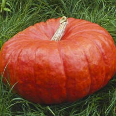 Тыква Руж виф д`Этамп /0,5 кг семян/ *Tezier*
