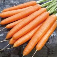 Морковь Элеганс F1 /100.000 семян (1,6-1,8)/ *Nunhems Zaden*