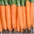 Морковь Элеганс F1 /100.000 семян (1,8-2,0)/ *Nunhems Zaden*