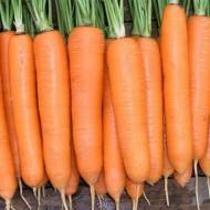 Морковь Элеганс F1 /100.000 семян primed (1,6-1,8)/ *Nunhems Zaden*
