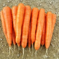 Морковь Колтан F1 /25.000 семян (1,4-1,6)/ *Nunhems Zaden*
