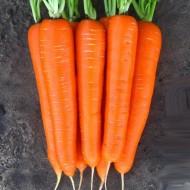 Морковь Лагуна F1 /100.000 семян (1,6-1,8)/ *Nunhems Zaden*