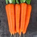 Морковь Лагуна F1 /100.000 семян (1,8-2,0)/ *Nunhems Zaden*