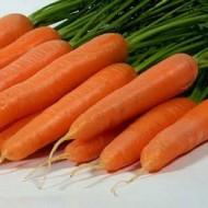 Морковь Лагуна F1 /100.000 семян primed (1,4-1,6)/ *Nunhems Zaden*