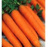 Морковь Романс F1 /100.000 семян (1,6-1,8)/ *Nunhems Zaden*