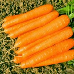 Морковь Романс F1 /100.000 семян (1,8-2,0)/ *Nunhems Zaden*