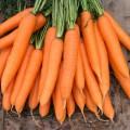 Морковь Сиркана F1 /25.000 семян (1,6-1,8)/ *Nunhems Zaden*