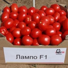 Томат Лампо F1 /10.000 семян/ *Nunhems Zaden*