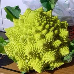 Капуста цветная Вероника F1 /2.500 семян/ *Bejo Zaden*