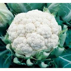 Капуста цветная Балбоа F1 /2.500 семян/ *Bejo Zaden*