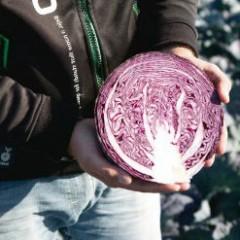 Капуста краснокочанная Климаро F1 /2.500 семян/ *Bejo Zaden*