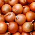 Лук Манас F1 /250.000 семян precision seeds/ *Bejo Zaden*