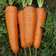 Морковь Канада F1 /1.000.000 семян (2,0-2,2 мм)/ *Bejo Zaden*
