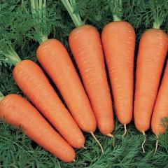 Морковь Канада F1 /1.000.000 семян (2,2-2,4 мм)/ *Bejo Zaden*