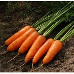 Морковь Каскад F1 /1.000.000 семян (2,0-2,2 мм)/ *Bejo Zaden*